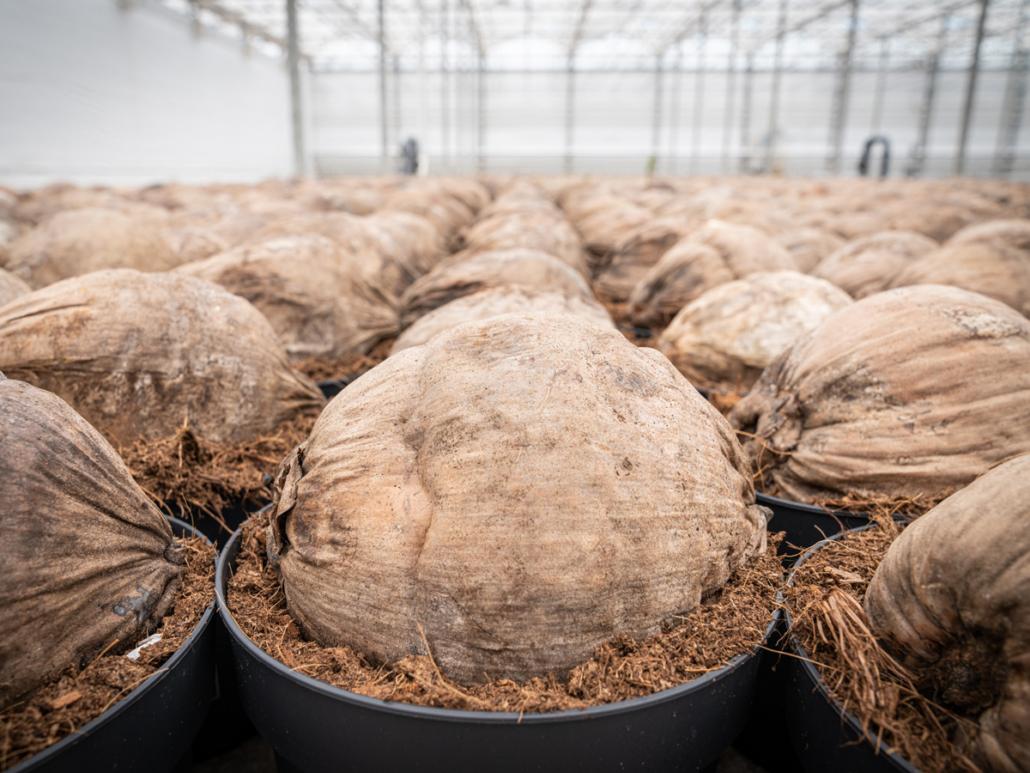kokos-potgrond