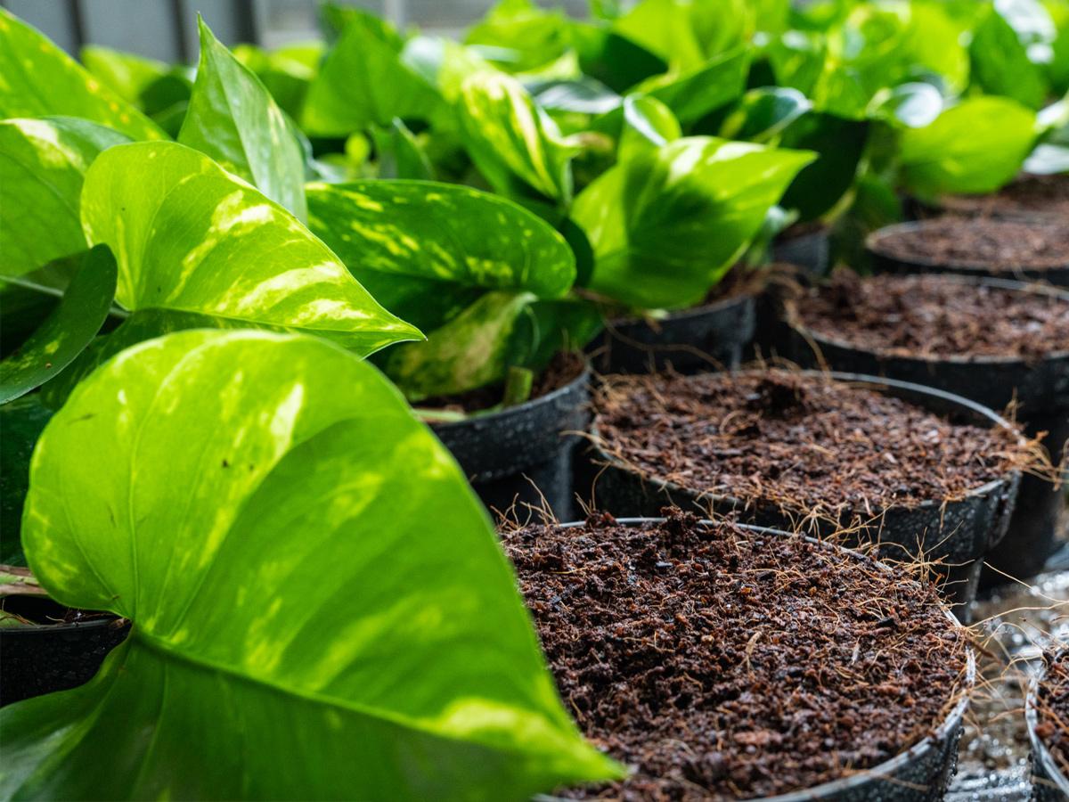 kokos-planten-potgrond
